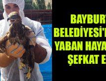 Kartal ve Baykuş Hayata Tutundu